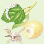 Serrapeptase Enzyme